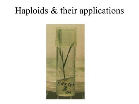 Haploids & their applications. Definition  The term haploid refers to those plants which possess a gametophytic number of chromosomes (n) in their sporophytes.