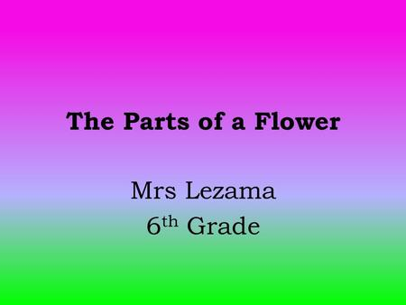 The Parts of a Flower Mrs Lezama 6 th Grade. Learning Objectives: Students will be able to identify and explain the function of each part of a flower.
