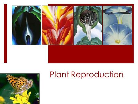 "Plant Reproduction.  Do not need to know page 773 or ""structure of the mature seed"""