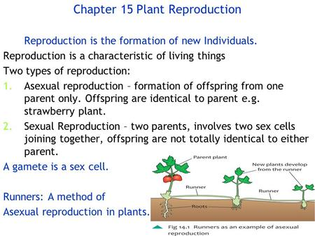 Chapter 15Plant Reproduction Reproduction is the formation of new Individuals. Reproduction is a characteristic of living things Two types of reproduction: