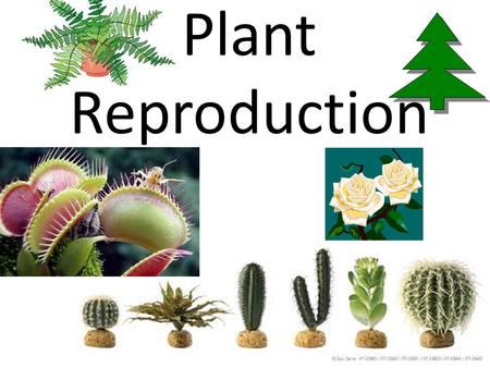 Plant Reproduction. Life Cycle of a Plant All the parts of a plant such as roots, stems and leaves except the flower, are known as the vegetative parts.