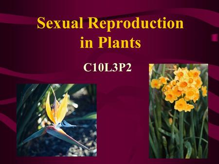 Sexual Reproduction in Plants C10L3P2. Genesis 1:11-13 11 Then God said, Let the earth bring forth grass, the herb that yields seed, and the fruit tree.