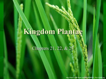 Kingdom Plantae Chapters 21, 22, & 23