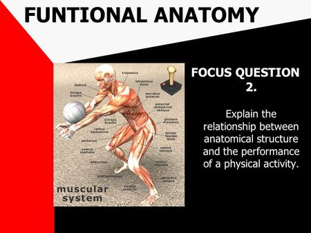FUNTIONAL ANATOMY FOCUS QUESTION 2. Explain the relationship between anatomical structure and the performance of a physical activity.