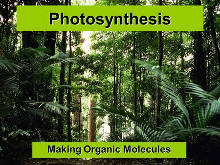 Photosynthesis Making Organic Molecules. Overview.