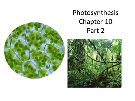 Photosynthesis Chapter 10 Part 2. The Light Reactions Driven by visible light – light is electromagnetic radiation – only small fraction of radiation.