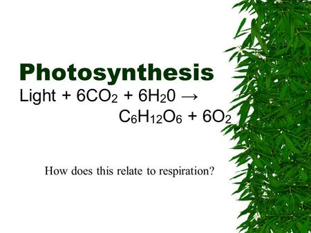 Photosynthesis Light + 6CO 2 + 6H 2 0 → C 6 H 12 O 6 + 6O 2 How does this relate to respiration?