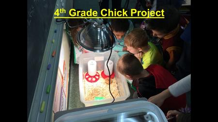 4 th Grade Chick Project. Life Cycle of a Chicken.