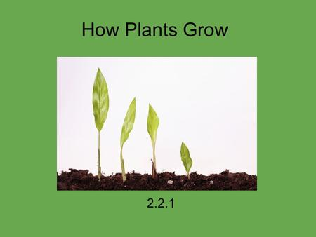How Plants Grow 2.2.1. How do plants grow? What do plants need to grow? 1) Soil 2) Sun 3) Water.
