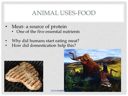 ANIMAL USES-FOOD Meat- a source of protein One of the five essential nutrients Why did humans start eating meat? How did domestication help this? www.assignmentpoint.com.