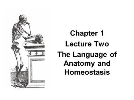 Chapter 1 Lecture Two The Language of Anatomy and Homeostasis.