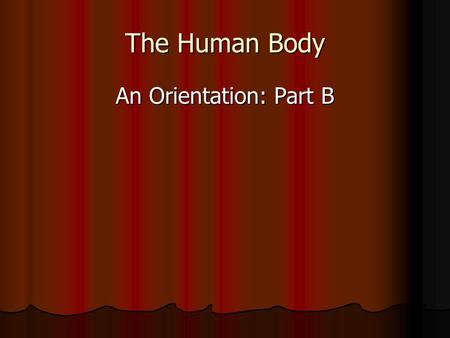 The Human Body An Orientation: Part B. Make sure this is in your journal or binder.