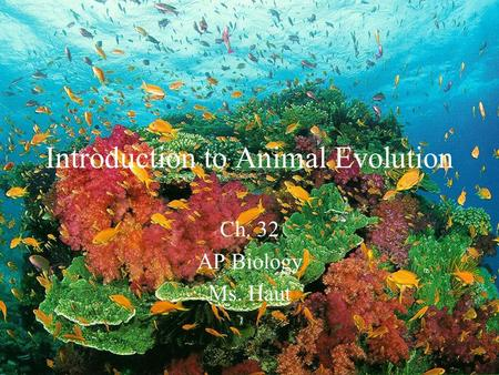 Introduction to Animal Evolution Ch. 32 AP Biology Ms. Haut.