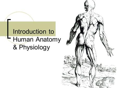 Introduction to Human Anatomy & Physiology. Why is it difficult to separate the topics of anatomy and physiology? Structure is always related to function!