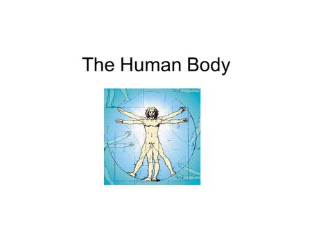 The Human Body. Cavities The human body has 4 major body cavities 1: Cranial Cavity (houses the brain) 2: Vertebral Canal (houses the spinal cord) 3: