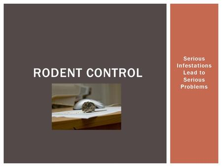 Serious Infestations Lead to Serious Problems RODENT CONTROL.