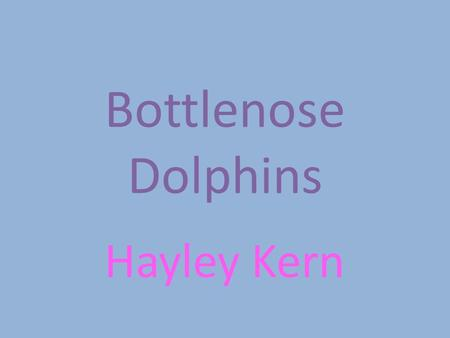 Bottlenose Dolphins Hayley Kern. Where does this animal live? They live in the ocean. I met one named Hope at an aquarium where she was rescued.
