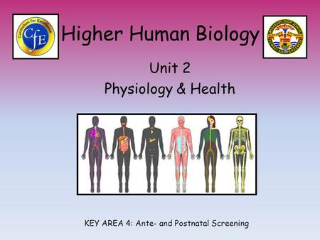 Higher Human Biology Unit 2 Physiology & Health KEY AREA 4: Ante- and Postnatal Screening.