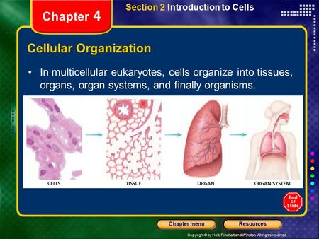 Copyright © by Holt, Rinehart and Winston. All rights reserved. ResourcesChapter menu Section 2 Introduction to Cells Chapter 4 Cellular Organization In.