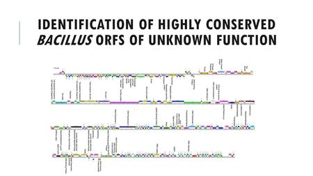 IDENTIFICATION OF HIGHLY CONSERVED BACILLUS ORFS OF UNKNOWN FUNCTION.