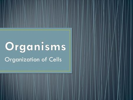 Organization of Cells. A branch of biology and medicine that considers the structure of living things Human anatomy focuses on the human body.