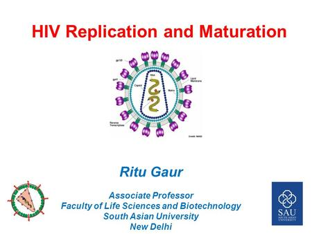 HIV Replication and Maturation Ritu Gaur Associate Professor Faculty of Life Sciences and Biotechnology South Asian University New Delhi.