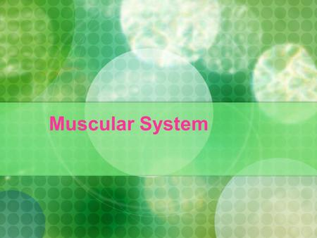 Muscular System. 1. The Human Muscular System Muscle is an organ that contracts to allow movement of the body. When muscle contracts it becomes shorter.