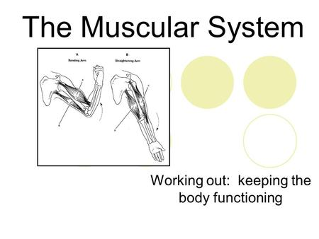 The Muscular System Working out: keeping the body functioning.