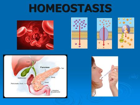 HOMEOSTASIS. Discussion Questions 1. What is homeostasis? 2. What does a living thing need to perform homeostasis? 3. What are some examples of things.