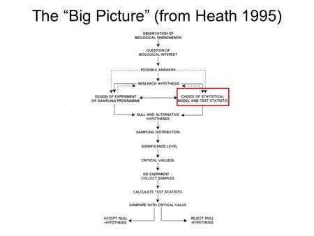 "The ""Big Picture"" (from Heath 1995). Simple Linear Regression."
