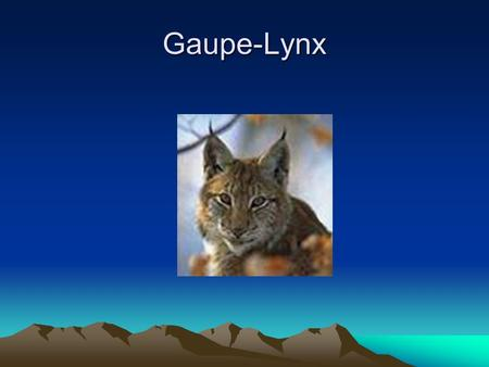 Gaupe-Lynx. Lynx A lynx is any of several medium-sized wild cats. Most are members of the genus Lynx.