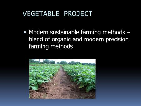 VEGETABLE PROJECT  Modern sustainable farming methods – blend of organic and modern precision farming methods.