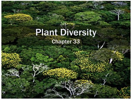 Plant Diversity Chapter 33. PHYLOGENY OF LAND PLANTS 33.1 Plant diversity is dominated by angiosperms, which make up about 90% of all extant plant species.