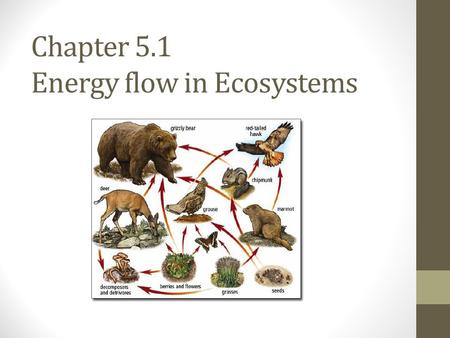 Chapter 5.1 Energy flow in Ecosystems. Sustaining Life on Earth Life depends on these interconnected factors: One-way flow of energy from the sun through.