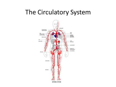 The Circulatory System. Circulatory System The Circulatory System has two major subdivisions: 1.The cardiovascular system: The heart 1.The lymphatic system: