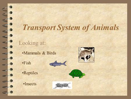 Transport System of Animals Looking at: Mammals & Birds Fish Reptiles Insects.