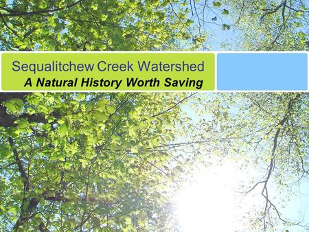 Sequalitchew Creek Watershed A Natural History Worth Saving.
