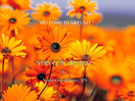 WELCOME TO A&P UNIT 7  CNS = Central Nervous System  PNS = Peripheral Nervous System  Question: What is autonomic nervous system ( ANS)?