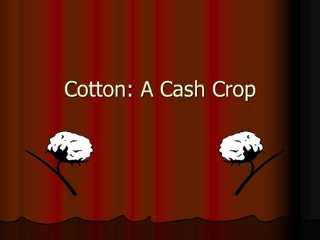 Cotton: A Cash Crop. Instructions: As you view the PowerPoint, fill out the note guide. Remember key words/terms will be in Red.