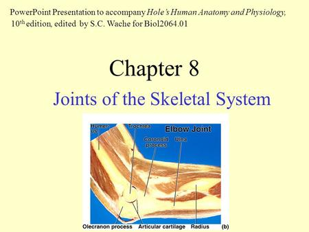 Chapter 8 Joints of the Skeletal System PowerPoint Presentation to accompany Hole's Human Anatomy and Physiology, 10 th edition, edited by S.C. Wache for.