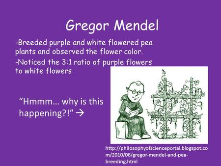 Gregor Mendel -Breeded purple and white flowered pea plants and observed the flower color. -Noticed the 3:1 ratio of purple flowers to white flowers