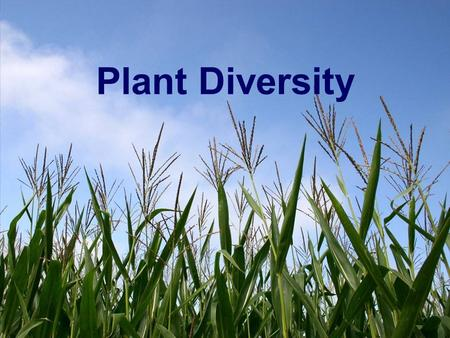 Plant Diversity. What are Plants? Multicellular (made of many cells) Eukaryotes (cells have nucleus & organelles) Cell Walls made of Cellulose Autotrophs.