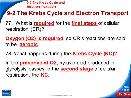 End Show 9-2 The Krebs Cycle and Electron Transport Slide 1 of 37 Copyright Pearson Prentice Hall 9-2 The Krebs Cycle and Electron Transport 77. What is.