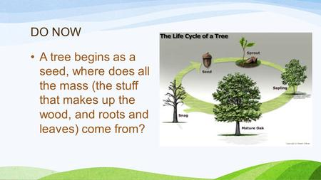 DO NOW A tree begins as a seed, where does all the mass (the stuff that makes up the wood, and roots and leaves) come from?