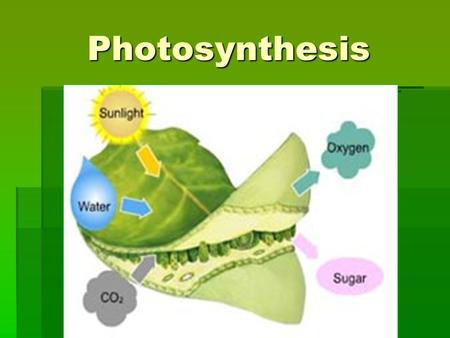 Photosynthesis. Energy Transformations – TWO TYPES ATP (Adenosine Triphosphate): is the energy molecule used in all living things, so supplies must be.