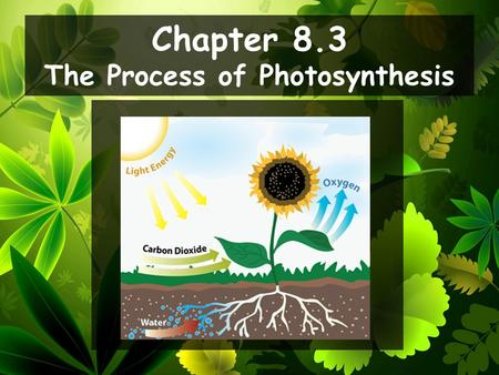 Chapter 8.3 The Process of Photosynthesis. Describe what happens during the light- dependent reactions. Explain what is meant by the term photosystem.