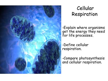 Lesson Overview Lesson Overview Cellular Respiration: An Overview Cellular Respiration Cellular Respiration -Explain where organisms get the energy they.