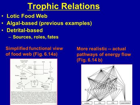 Trophic Relations Lotic Food Web Algal-based (previous examples)