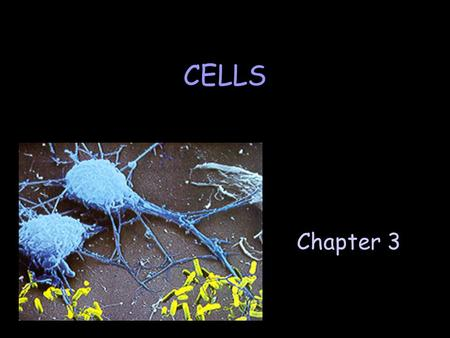 Chapter 3 CELLS. A. The Early Years ] Robert Hooke (1660) F 1st person to see the outlines of cells ] Antonie van Leeuwenhoek (1673) F developed high.