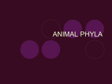 "ANIMAL PHYLA. Phylum Porifera The name porifera means ""pore-bearing"" This phylum consists of the sponges."